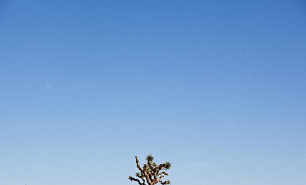 Joshua Tree National Park near Palm Springs California wedding by Ohana Photographers